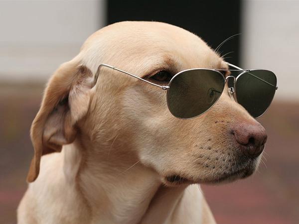 stylish-funny-dog.jpg